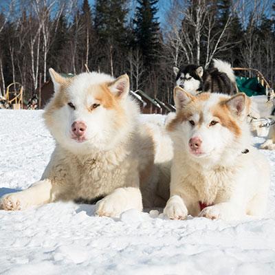 Traineau à chien en hiver à la Pourvoirie Mekoos