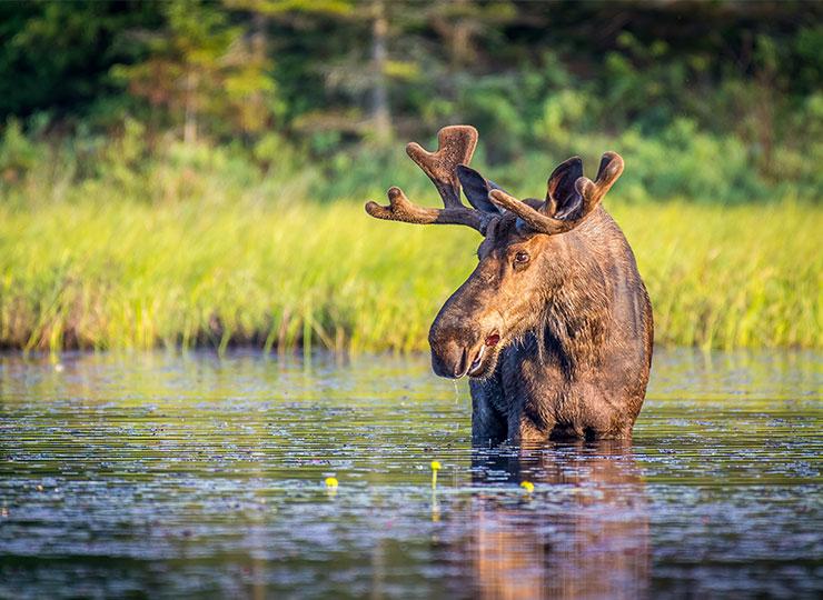 Chasser avant les autres dans la zone 15 ouest, là où la gestion de la faune est prioritaire